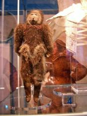 Sealskin doll